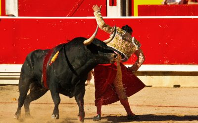 What about bullfighting ?